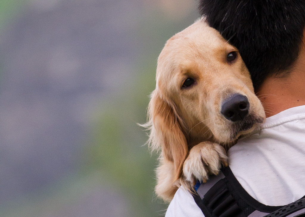 dog being held by owner